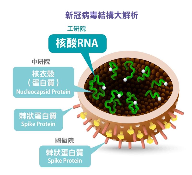 新冠病毒結構大解析。